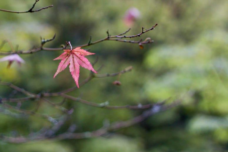 Japanese Garden @ The Arboretum