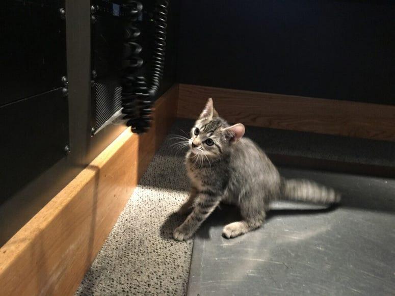 Catapalooza Kitty!