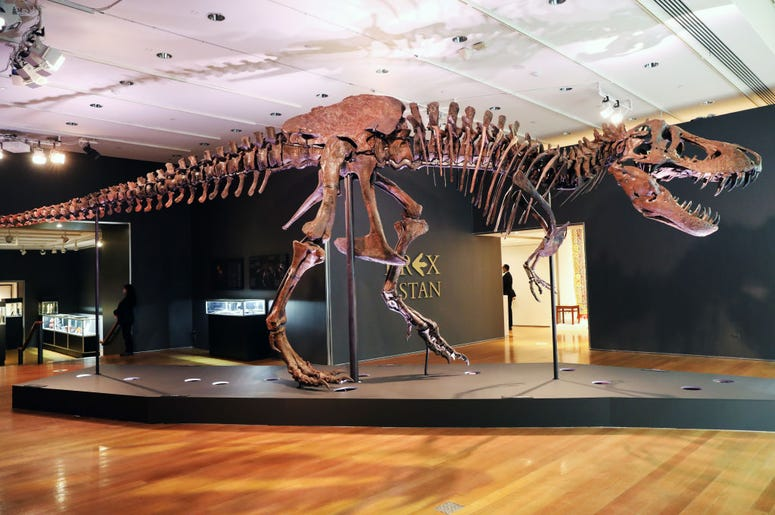 Stan the T-Rex Skeleton