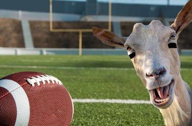 Prize Goat Football