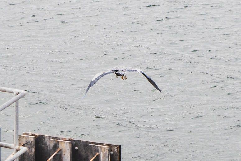 Cool bird - looks like a heron