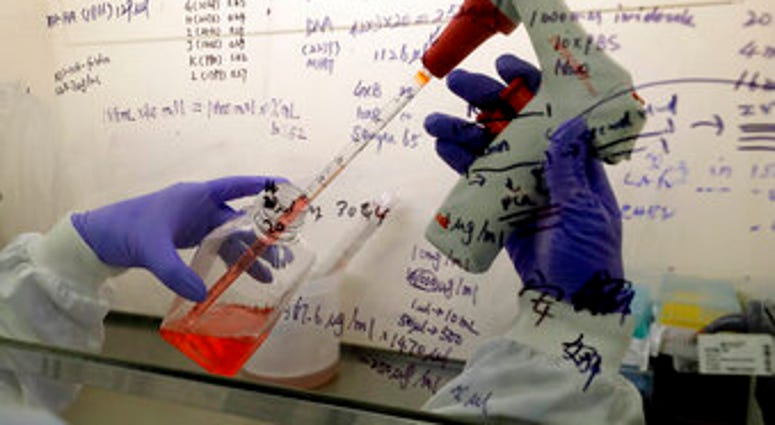 FILE - In this July 30, 2020 photo, Kai Hu, a research associate transfers medium to cells, in the laboratory at Imperial College in London. (AP Photo/Kirsty Wigglesworth)