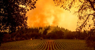Smoke rises over a vineyard as the Glass Fire burns, Monday, Sept. 28, 2020, in Calistoga, Calif. (AP Photo/Noah Berger)