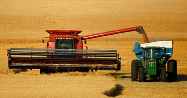 FILE - In this June 15, 2018 photo, winter wheat is harvested in a field farmed by Dalton and Carson North near McCracken, Kan. With the start of the winter wheat harvest just weeks ago, U.S. custom harvesters are having problems getting into the country
