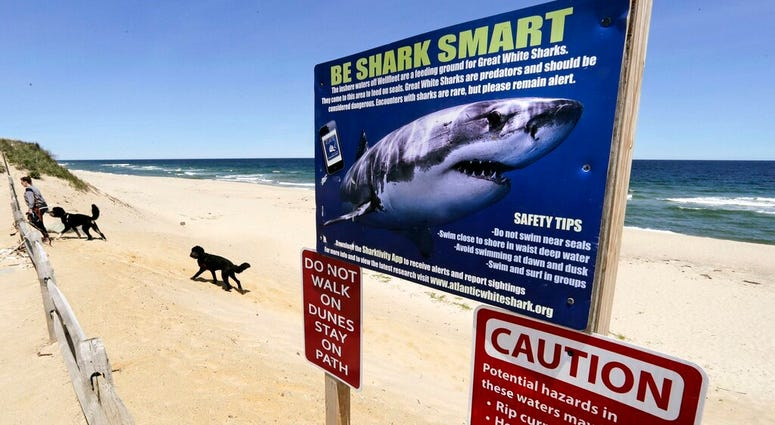 FILE - In this May, 22, 2019, file photo, a woman walks with her dogs at Newcomb Hollow Beach in Wellfleet, Mass., where a boogie boarder was bitten by a shark in 2018 and later died of his injuries.