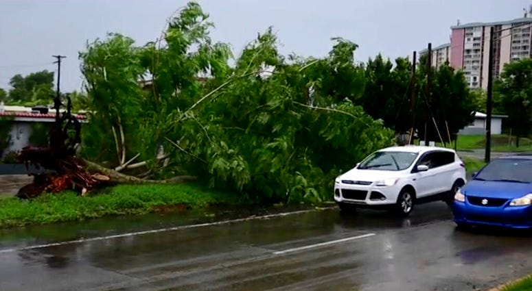 In this image made from video, a large tree toppled by tropical storm winds is seen in Alto Trujillo, Puerto Rico, Thursday, July 30, 2020.  (AP Photo)