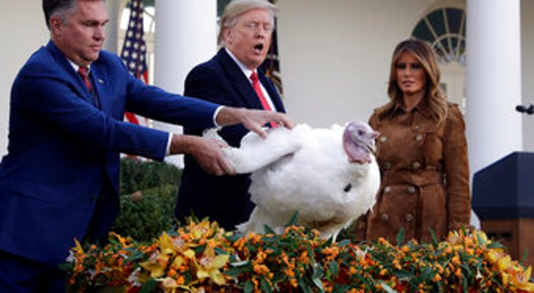 President Donald Trump pardons Butter, the national Thanksgiving turkey, in the Rose Garden of the White House, Tuesday, Nov. 26, 2019, in Washington, as first lady Melania Trump watches. (AP Photo/ Evan Vucci)