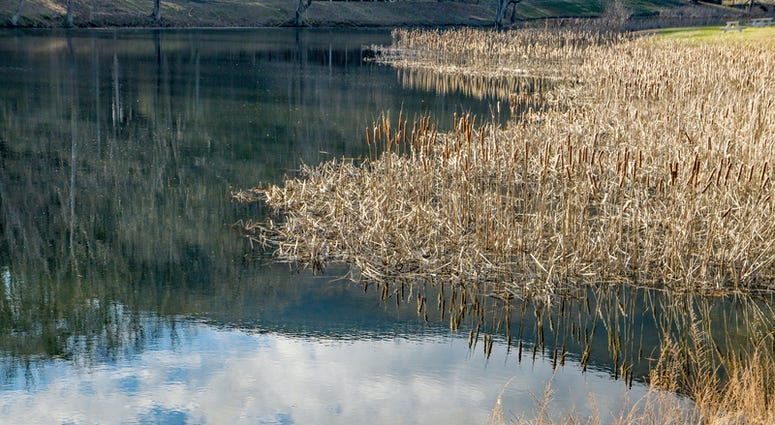 Sandy Level, VA – January 8th: View of the reeds, fishing pond and reflections at the Smith Mountain Dam picnic area located in Sandy Level in Pittsylvania County, Virginia, USA on January 8th, 2019.(Dreamstime)