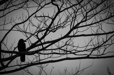 spooky crow in woods halloween motif