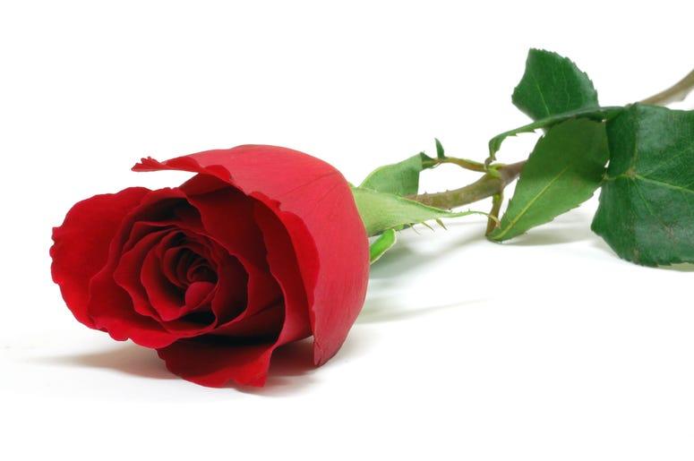 Rose (Bachelorette)