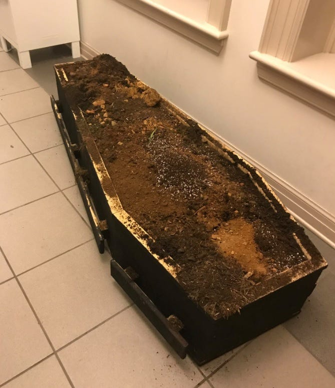 Protesters in Asheville leave coffin in front of the municipal building