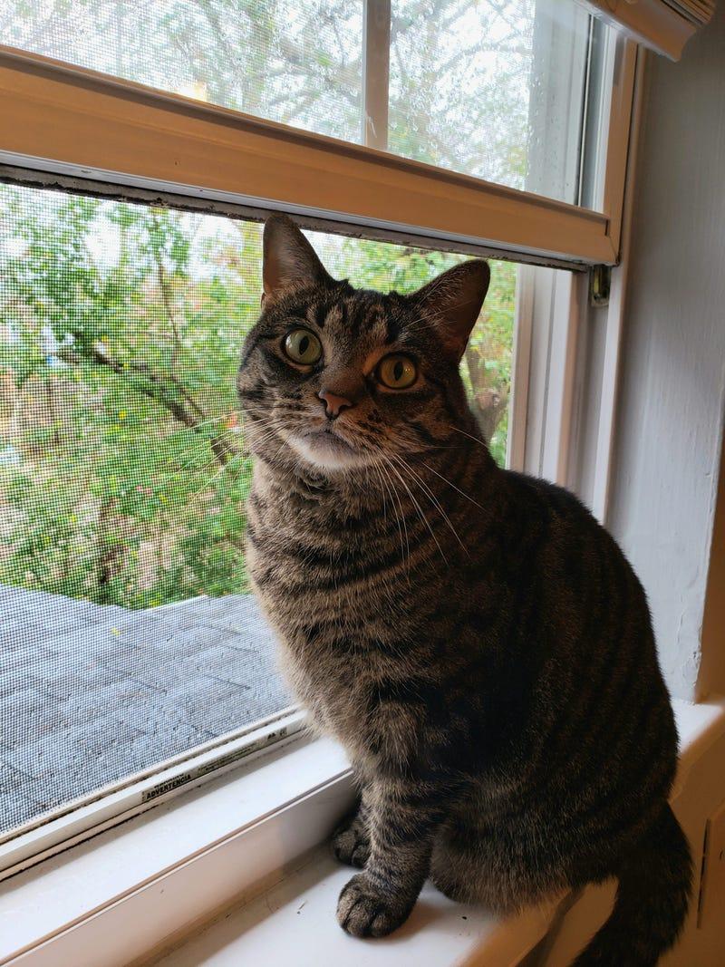 Devin Cat Furbaby Meet