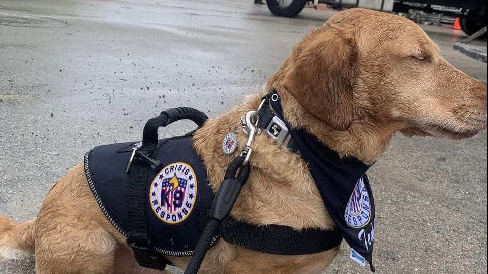 Surfside collapse therapy dog regains ability to walk after flown home to Philly