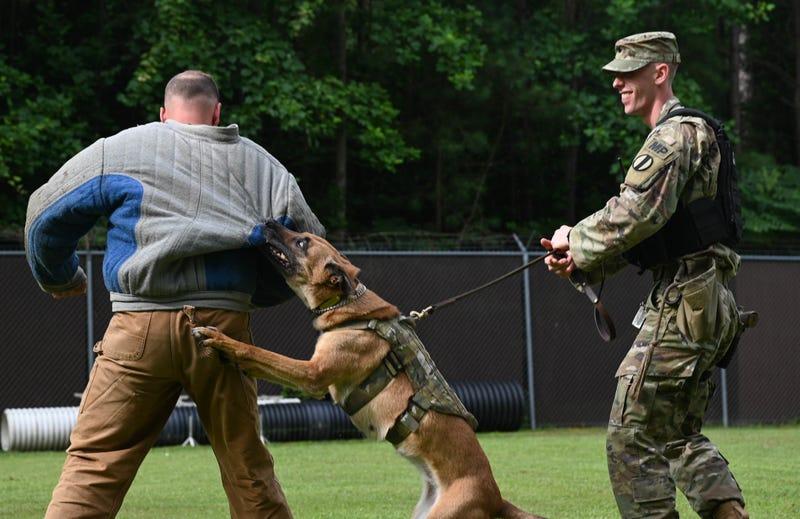 Working like a dog: Military Working Dog Maya serves our nation