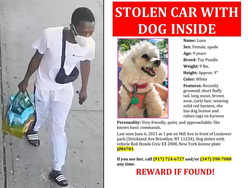 Stolen dog in car Brooklyn