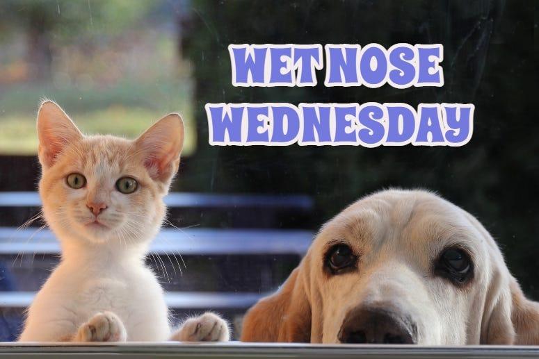 Wet Nose Wednesday 2021
