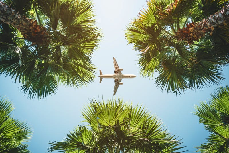 A plane passes overhead through palm trees and sunny blue sky
