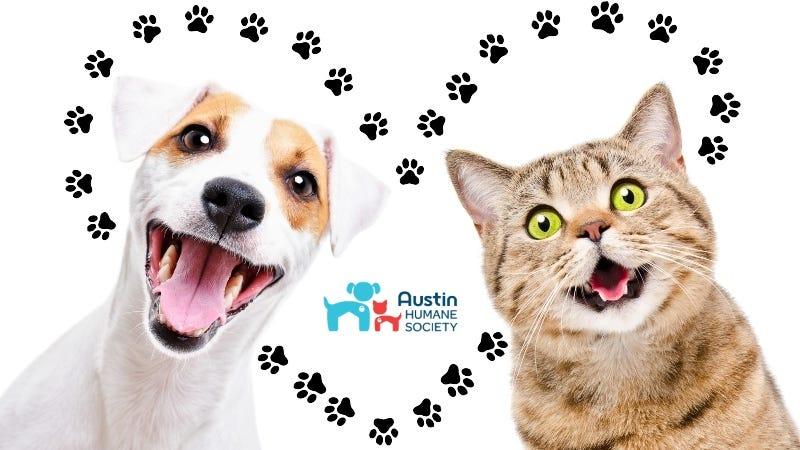 Austin Humane Society art Getty Images