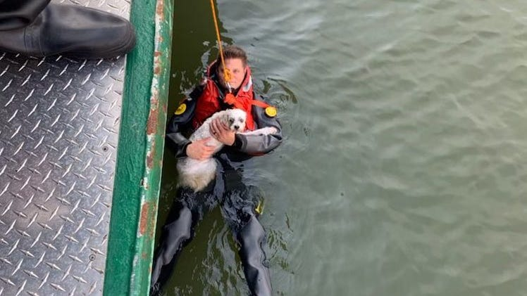 PHOTOS: Police rescue man who jumped into river to save dog