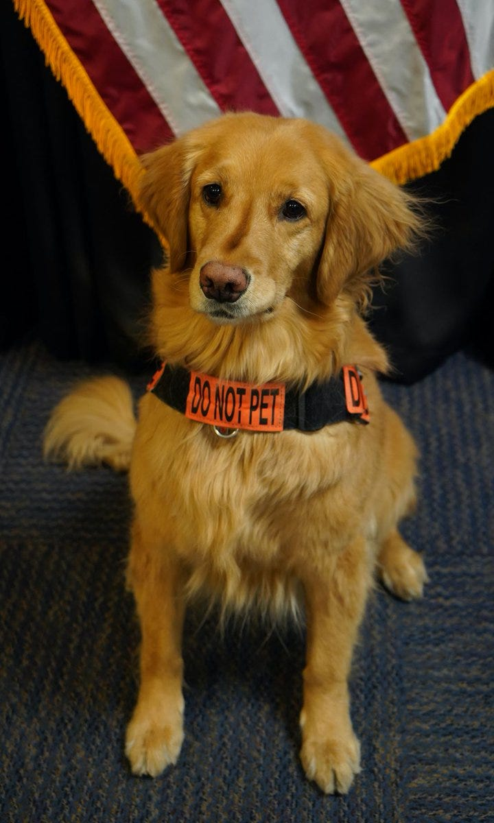 TSA names Alona, a Golden Retreiver, the agency's 'Cutest Canine' of 2021