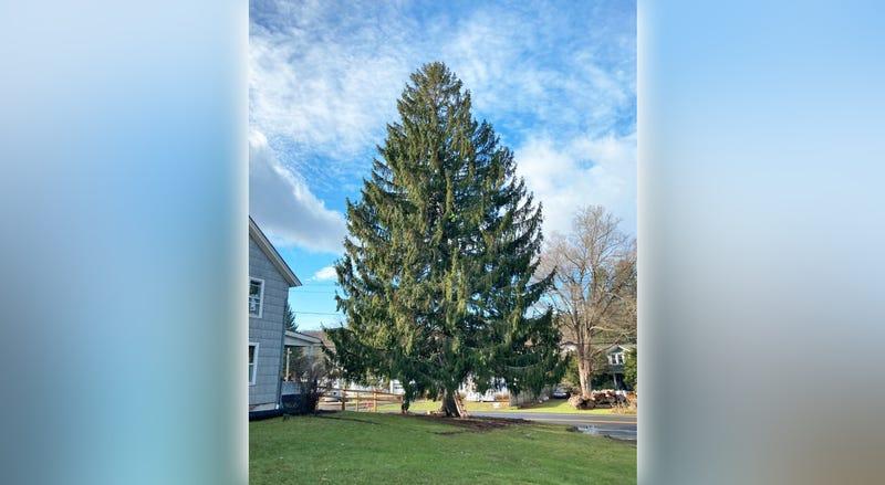 Rock Christmas Tree