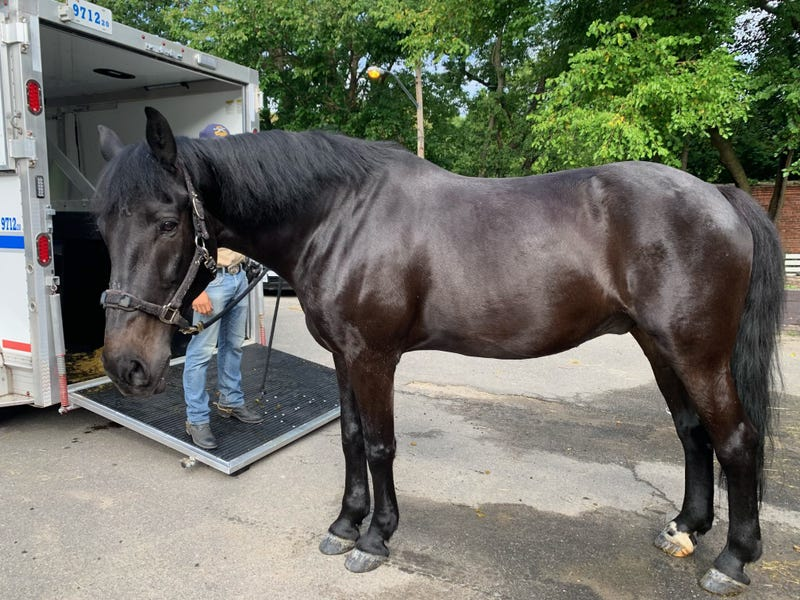 Broadway, a veteran horse on the NYPD's mounted unit, is retiring to a local Connecticut farm after 12 years of service, the department announced Sunday.