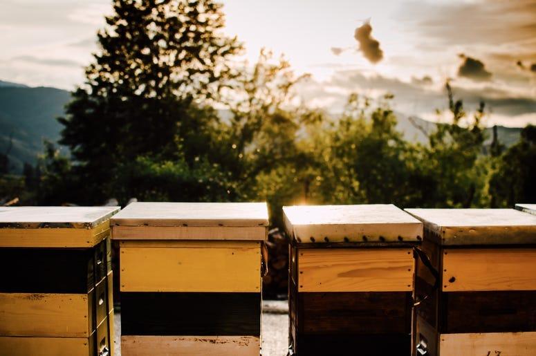 honey in the sun