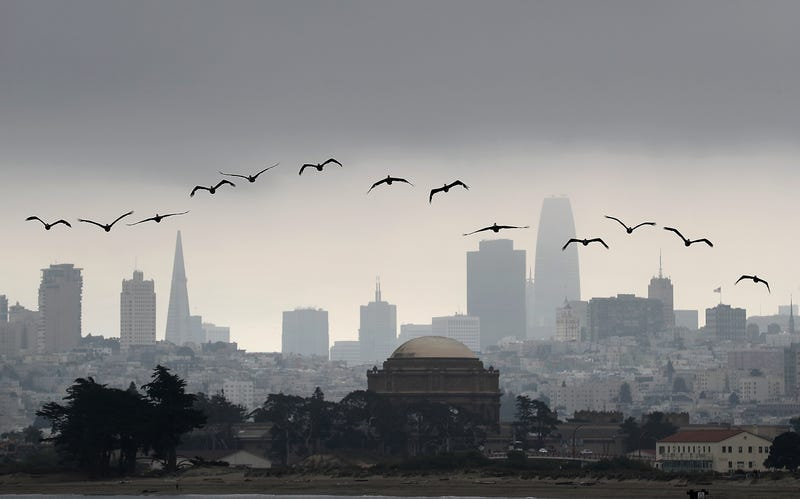 Brown pelicans fly in front of the San Francisco skyline on August 17, 2018 in San Francisco, California.