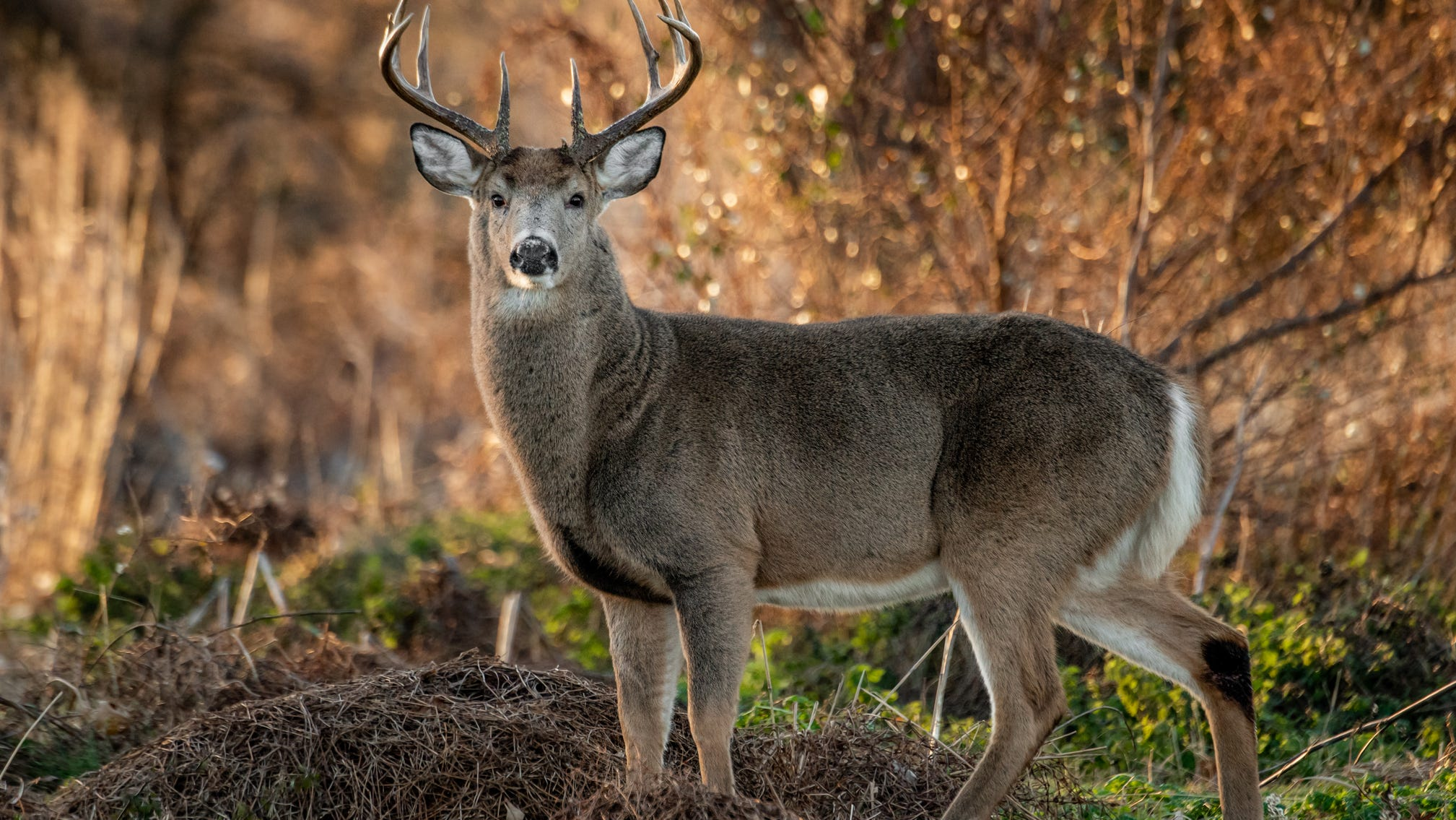 Philly imposes curfews in city parks for deer harvest