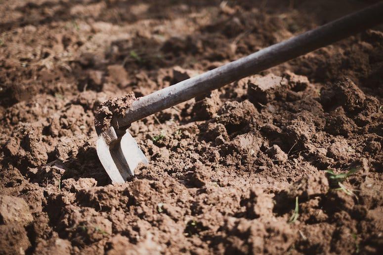 Garden hoe in dirt