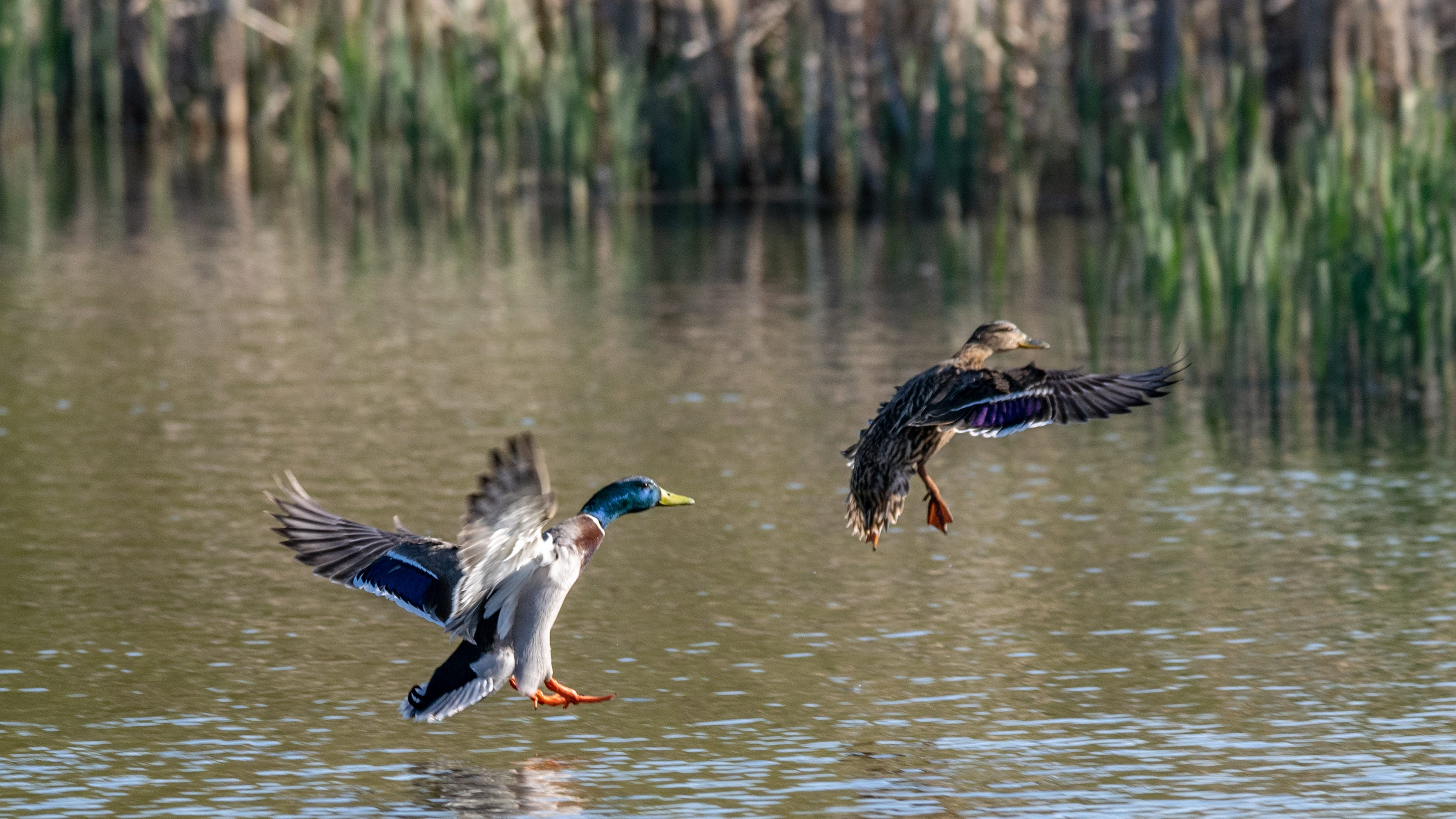 Louisiana man fined $5,000 for Migratory Bird Treaty Act violation