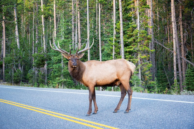 Crash with elk leads to death of Minnesota teen