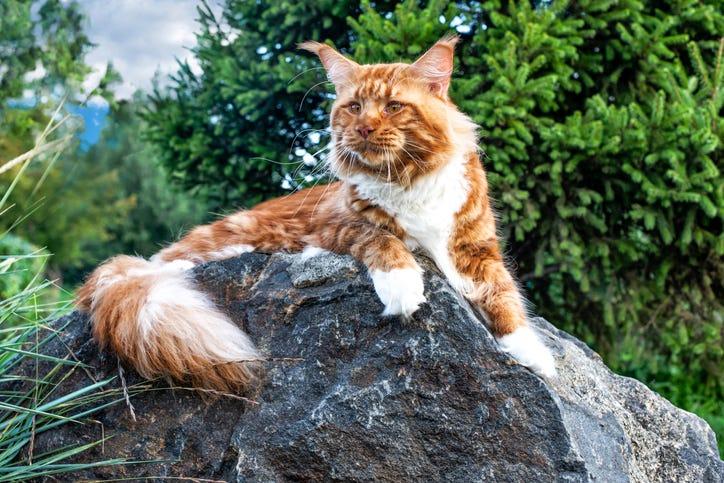 World's Oldest Cat Dies at 31