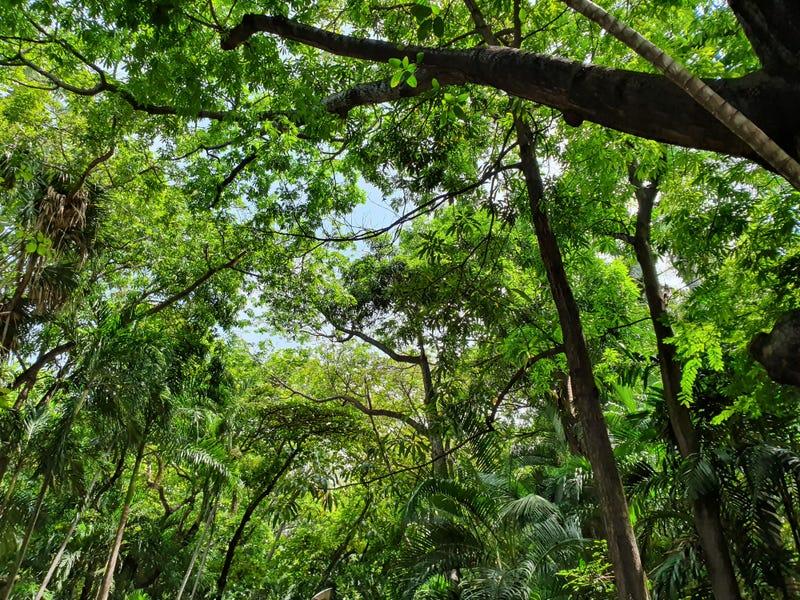 selva mexicana