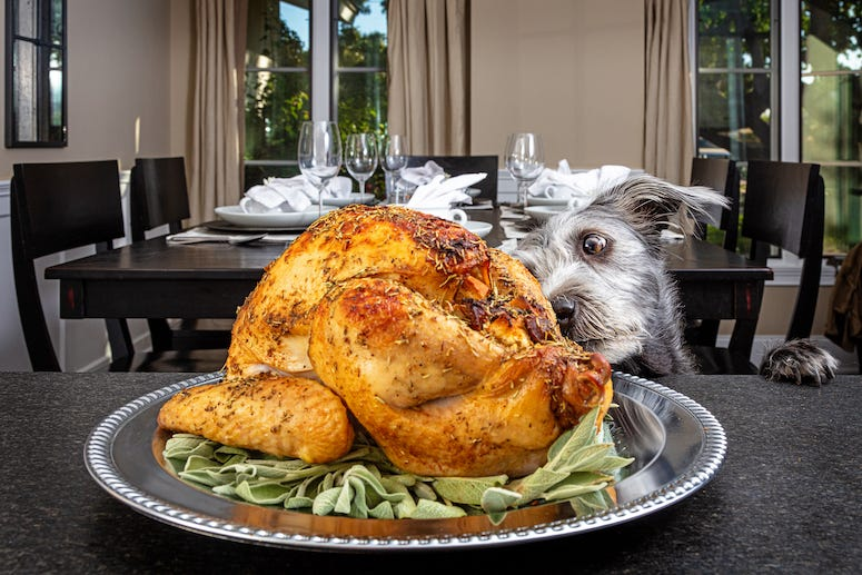 Dog, Turkey, Thanksgiving, Sniffing, Table