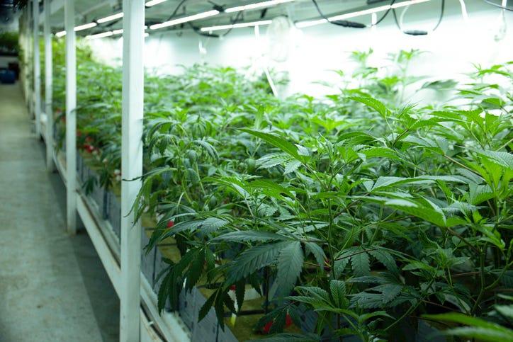 Massive marijuana facility to break ground in Lake Orion next week