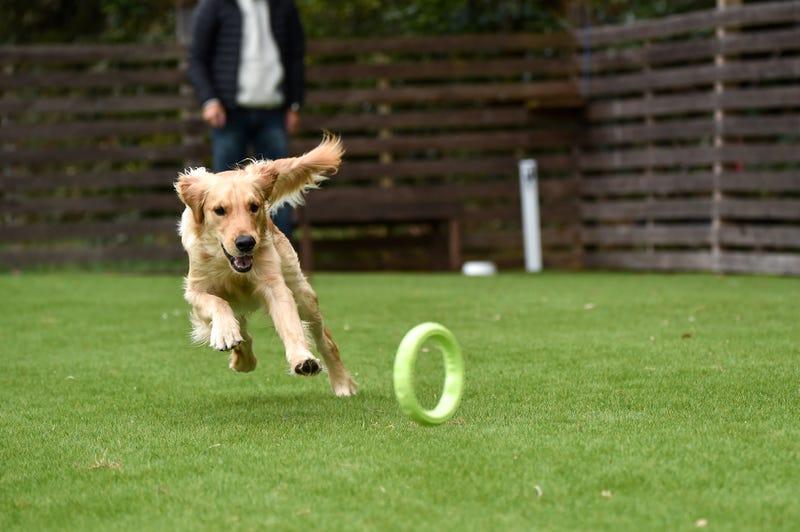 Dog playing at dog park