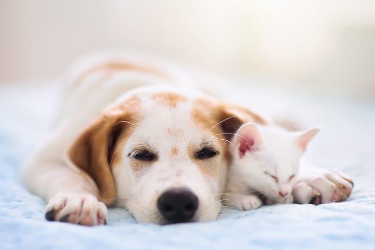Dog and cat nuzzling, sleeping