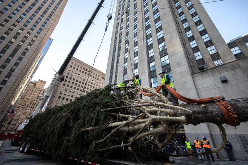 Workers raise the Rockefeller Center Christmas Tree on November 14, 2020 in New York City.