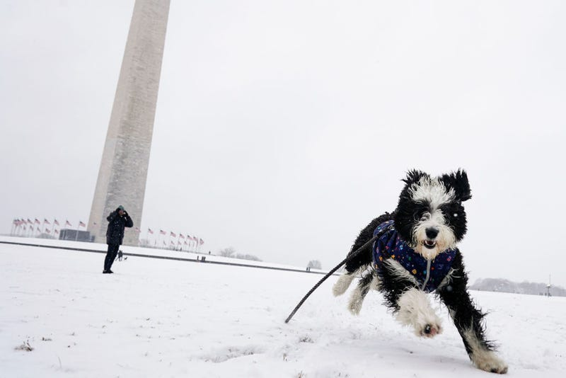 dog frolicks in the snow outside the National Mall