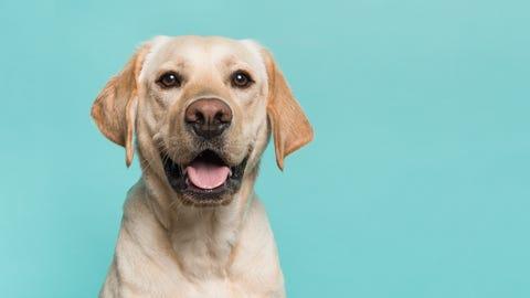 Pet adoption at Pawtriotic Dog Bakery in Murrieta