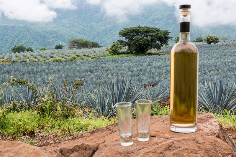 The best bottles of tequila