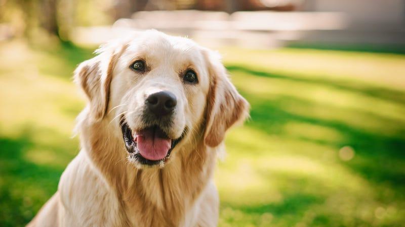 Make-A-Wish Illinois grants visually-impaired student's wish service dog