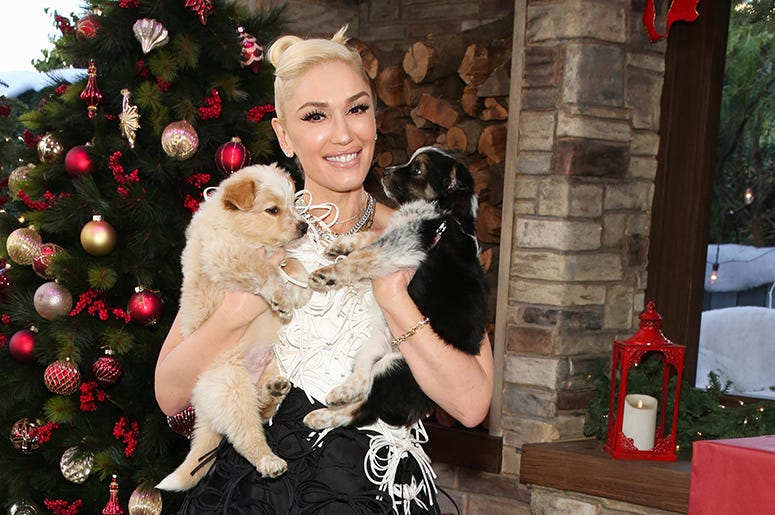 Gwen Stefani with puppies!