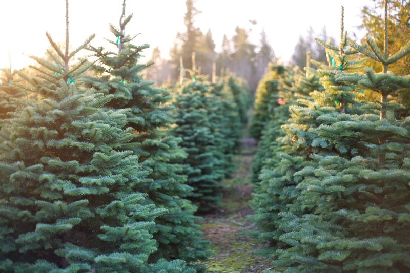 Official: Folks are anxious to purchase a Christmas tree.