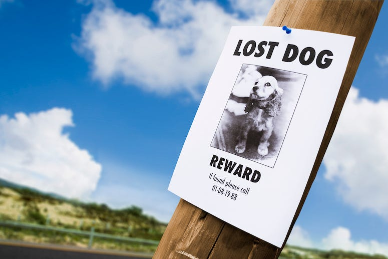 Lost Dog, Missing Dog, Poster, Sign