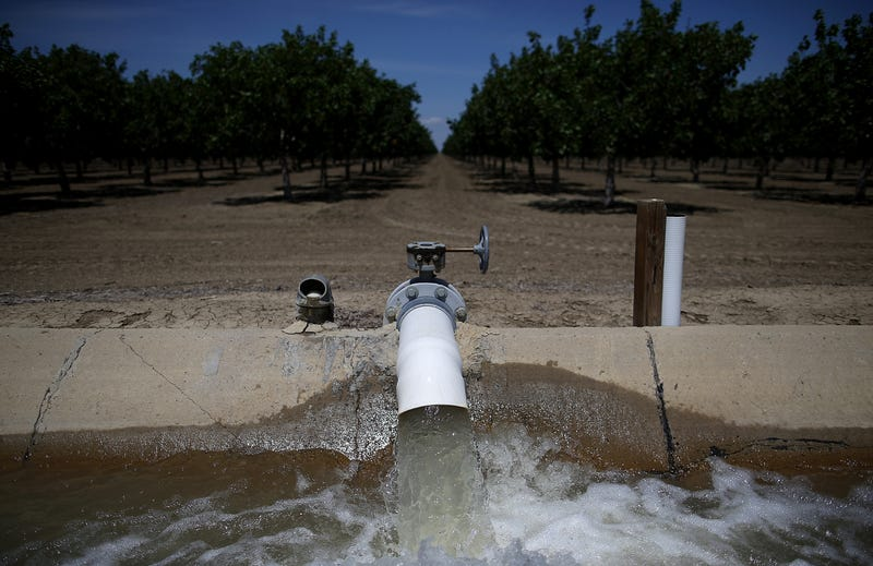 Water is pumped into an irrigation canal at an almond orchard on April 24, 2015 in Firebaugh, California.