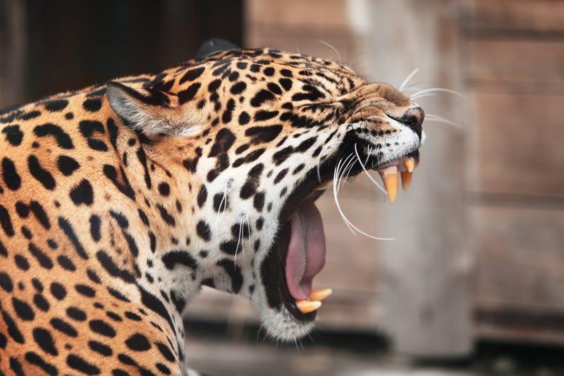 Portrait of wild animal