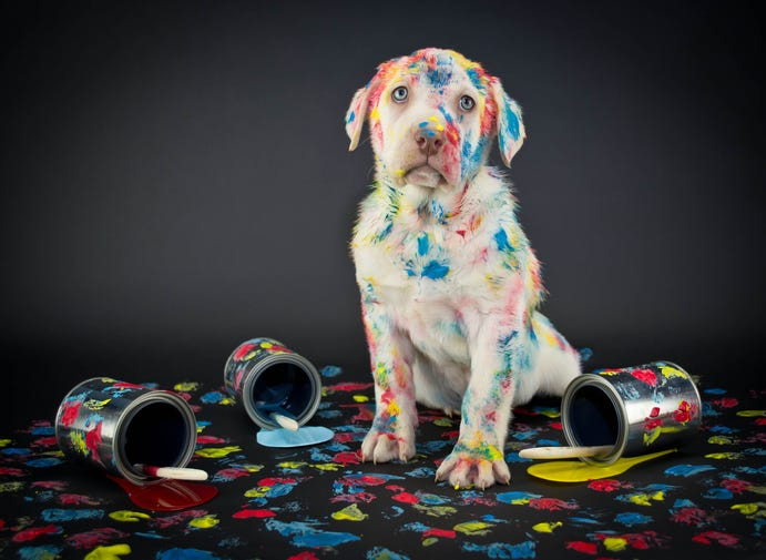 Dog goes viral after turning himself blue with oil paint75756A5E-120A-4932-810C-2FD980DB785E