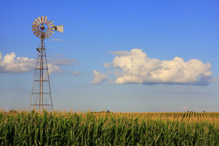 Cornfield in Iowa